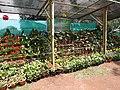 Yercaud 44th Flowershow-15-yercaud-salem-India.jpg