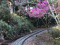 Zhushan Railway 祝山鐵道 - panoramio.jpg