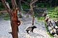 Zoo-15-07-08 291.JPG