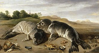 Paul de Vos - Two young seals on a beach