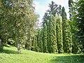 """""""Я знаю, что деревьям, а не нам, Дано величье совершенной жизни...."""" Н. Гумилев.JPG"""