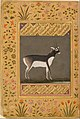 """Black Buck"", Folio from the Shah Jahan Album MET DT4811.jpg"