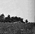"""""""Kažeta""""- kmečko pastirsko zaklonišče pri Marezigah 1950.jpg"""