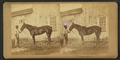 (Horse named) Hermosa, by James Mullen.png