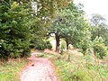 (PL) Polska - Warmia - Ścieżka nad jeziorem Bartąg do Bartążka - The path to Bartazek on the lake Bartag (IX.2012) - panoramio (1).jpg