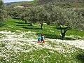 Çiçeklerin içinde - panoramio.jpg