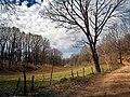 Χαμένοι στο δάσος της Φολόης.jpg
