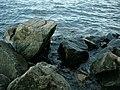 Берег Каховского водохранилища - panoramio.jpg