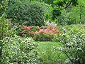 Ботанічний сад ім. І.Фоміна IMG 7400.jpg
