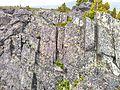 Вертикальные породы - panoramio.jpg