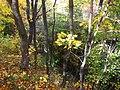 Вінничина, Муровані Курилівці парк Жван 13.jpg