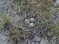 Гнездо на берегу Булаховского лимана.jpg