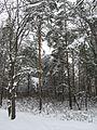 Дендрологічний парк 469.jpg