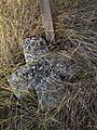 Курган біля кладовища с.Новоселівка, менший кам'яний хрест.JPG