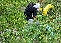 Маляры работают в детском саду г. Северодвинска.JPG