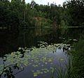 Озеро Глухое (Марий Эл) 01.jpg