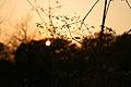Осенний закат в балке КР01.JPG
