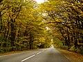 Осень - panoramio (12).jpg