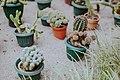 Полярно-альпийский ботанический сад оражерея 2.jpg