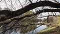 Река Серебрянка 35.jpg