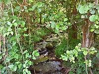 Река во близина на село Дреново.jpg