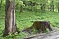 Трускавецький парк 6.jpg
