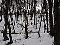 Украина, Киев - Голосеевский лес 31.jpg