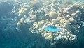 דג בסלע משה 2.jpg