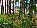 سبز،سبزم - panoramio.jpg