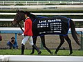 ロードカナロア引退式 - 京都競馬場 - Retirement ceremony of Lord Kanaloa - Kyoto Racecourse (12050227733).jpg