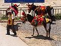 三匹驢子 Three Donkeys - panoramio.jpg