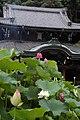 三室戸寺 - panoramio.jpg