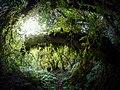 宛如史前時代的森林.jpg
