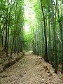 山辺の道 - panoramio.jpg