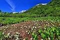 栂池自然園 - panoramio (14).jpg