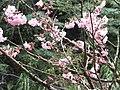 橫屏背 Hengpingbei - panoramio.jpg