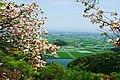 歌垣公園より白石平野 - panoramio.jpg