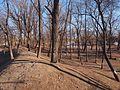 琦春园遗址 - Site of Qichun Garden - 2013.03 - panoramio.jpg