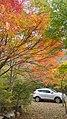 내장산 단풍.jpg
