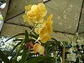 05593jfMidyear Orchid Exhibits Quezon Cityfvf 19.JPG