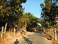 0581jfLandscapes Mabalas Diliman Salapungan Paddy fields San Rafael Bulacan Roadsfvf 06.JPG