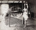 1880s Sorting tea Ceylon Sri Lanka 2.jpg