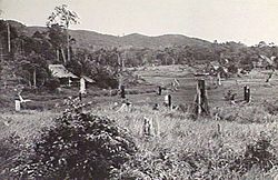 A rural setting showing a cleared flat area in front of densely vegetated high ground in the distance. A plantation house is visible in the middle ground