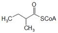 2-metilbutiril CoA.png