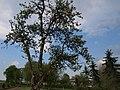 2011-04-23-162736 50,129786, 6,162851.JPG - panoramio.jpg
