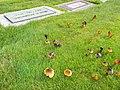 2011-10-31 Hygrocybe conica (Schaeff.) P. Kumm 178721.jpg