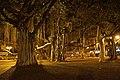 2012-02-10 02-19 Maui, Hawaii 023 Lahaina, Banyan Tree (6929895869).jpg