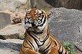 2012-09-15 Tierpark Berlin 33.jpg