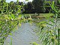 20120807Hopfen Saarbruecken1.jpg