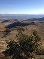 2014-10-09 08 59 24 Limber Pine near 9400 feet on the western slopes of Granite Peak in Humboldt County, Nevada.JPG